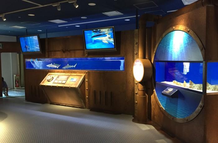 海遊館25周年特別展示「シャーク ワールド~ハンターたちの捕食に迫る!~」